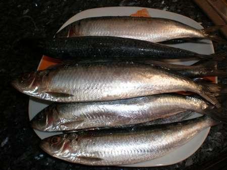 t0hg - ▷ Banderillas de sardinas al ajillo 🍢🐟